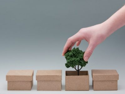 Female hand lifting a miniature tree out of a cardboard box